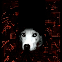 La kyrielle des chiens, 2011